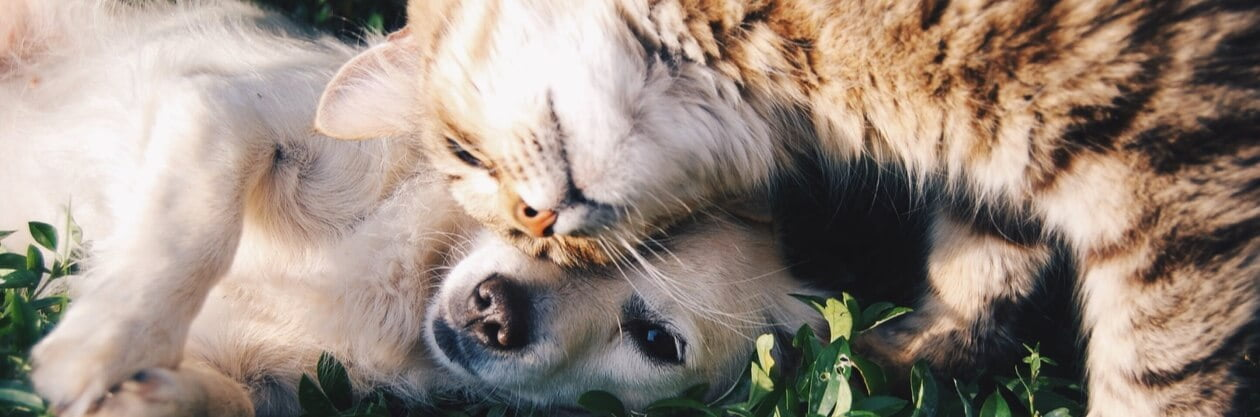 Dog and cat loving each other